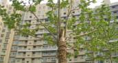 O tym, jak wiosna wpływa na rynek nieruchomości